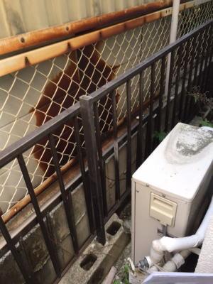 隣地の鉄製の物置小屋が給湯器の排気で腐食した例